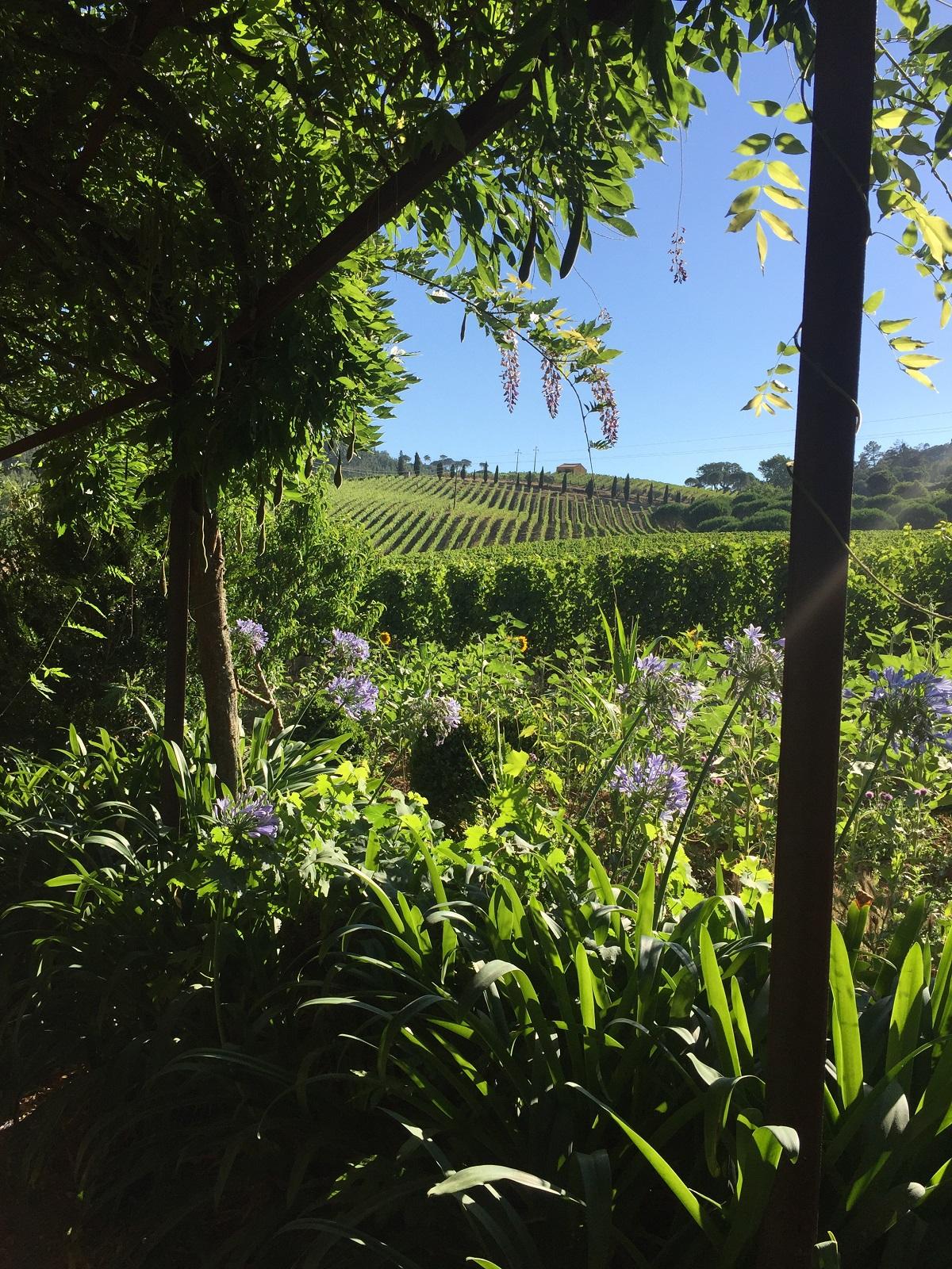 Incentive trip at a vineyard.